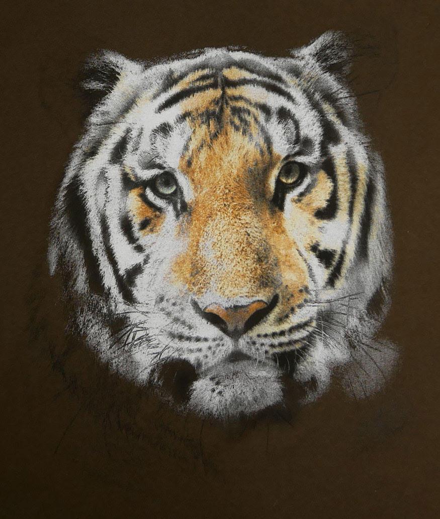 beautiful tiger screen printed on t-shirt