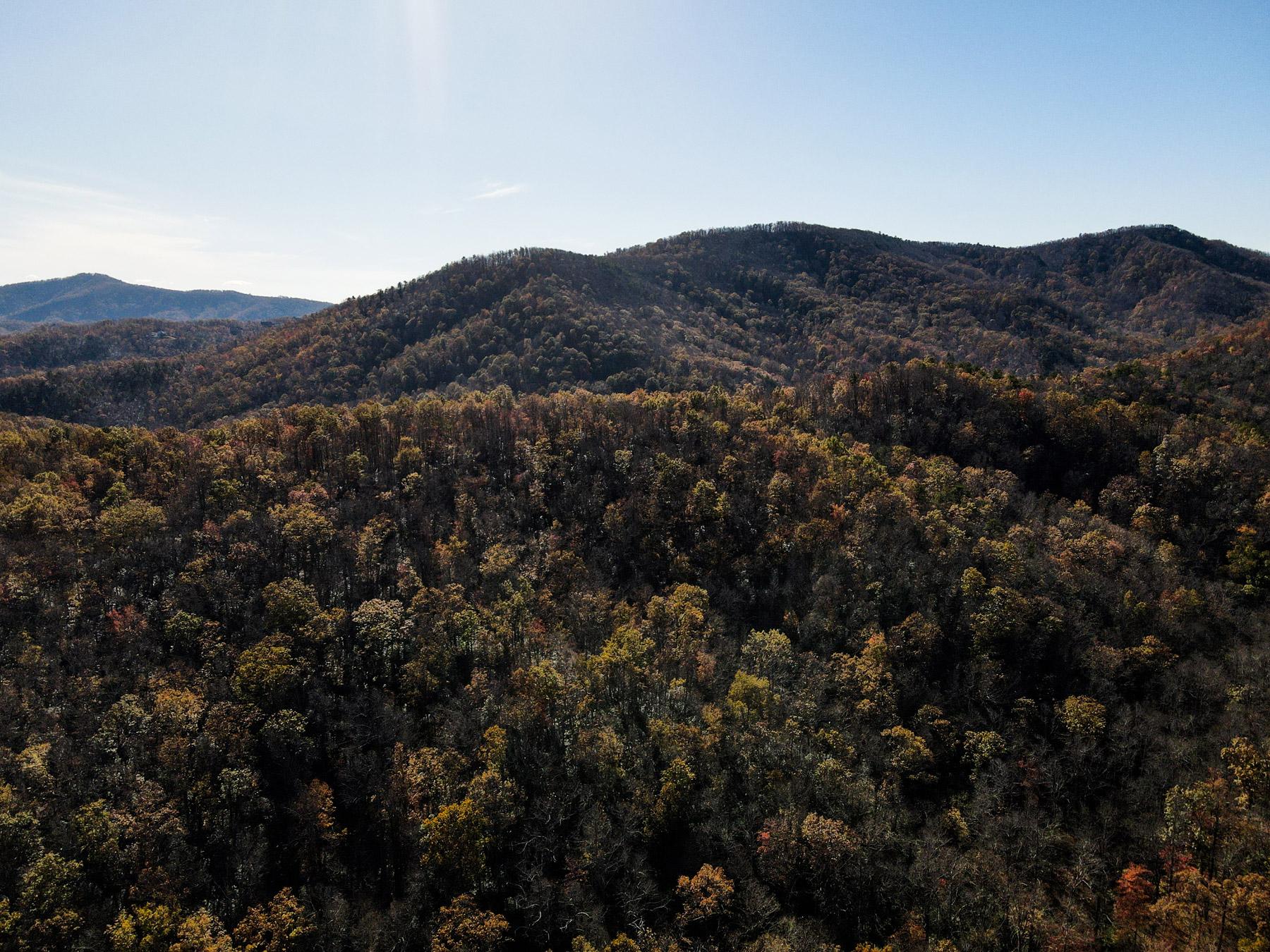 Beautiful fall trees on Black Mountain in North Carolina